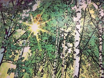Árboles con sol de fondo