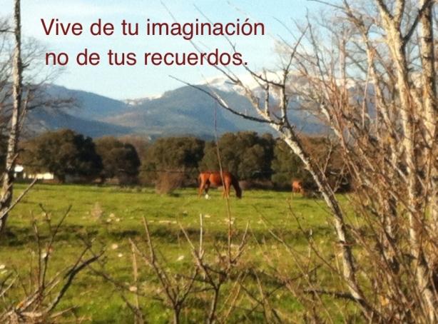 Foto de campo con caballos
